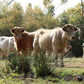Huella Ecológica, Económica y Sanitaria del consumo de carne en España